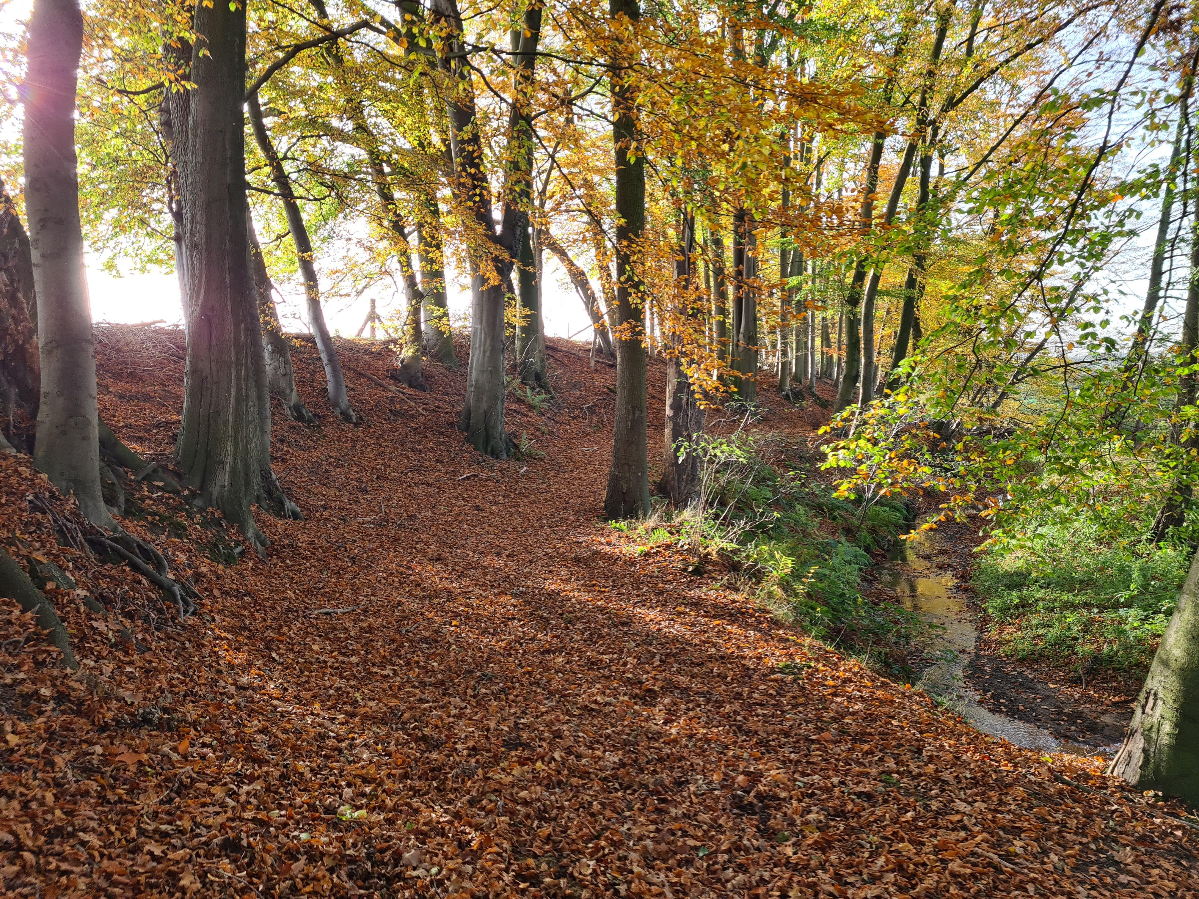 Geländestrecke mit Wald